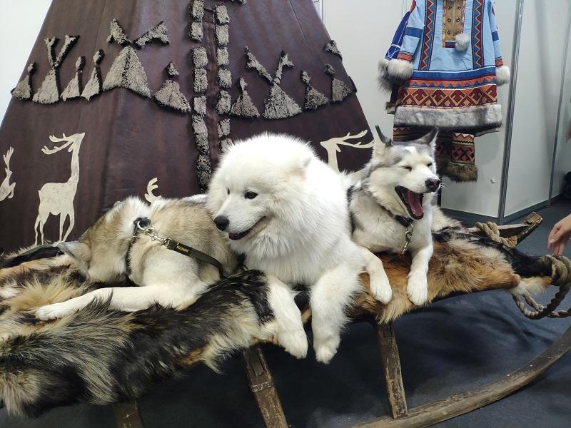 В Красноярске открылась выставка животных