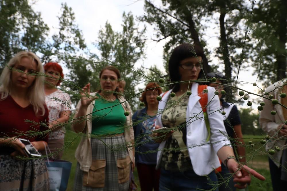 Ботаникоэкскурсия на остров Татышев: какие цветы растут в центре города
