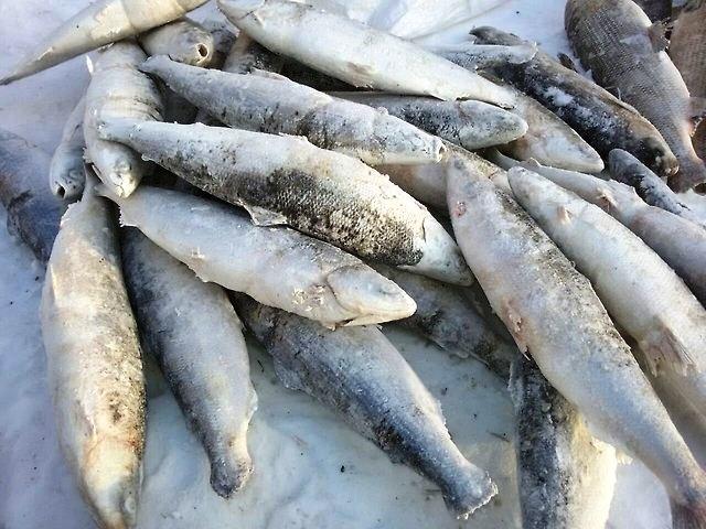 Красноярцам расскажут, как выбирать рыбу и мясо