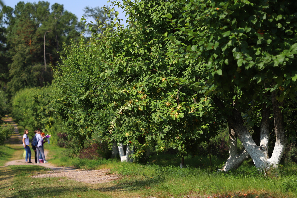 115 лет исполняется уникальному саду Крутовского