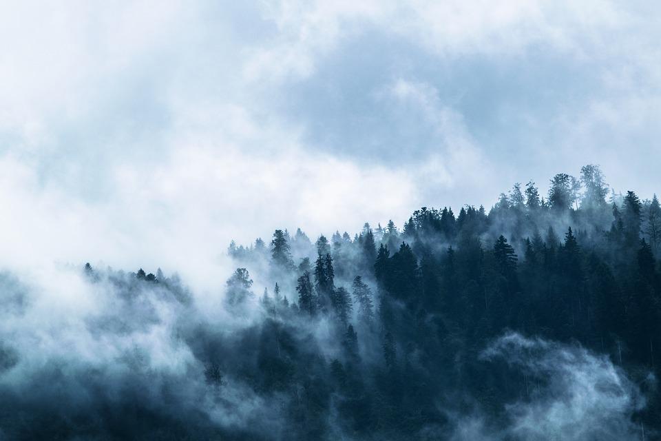 Полиция проверила красноярские леса