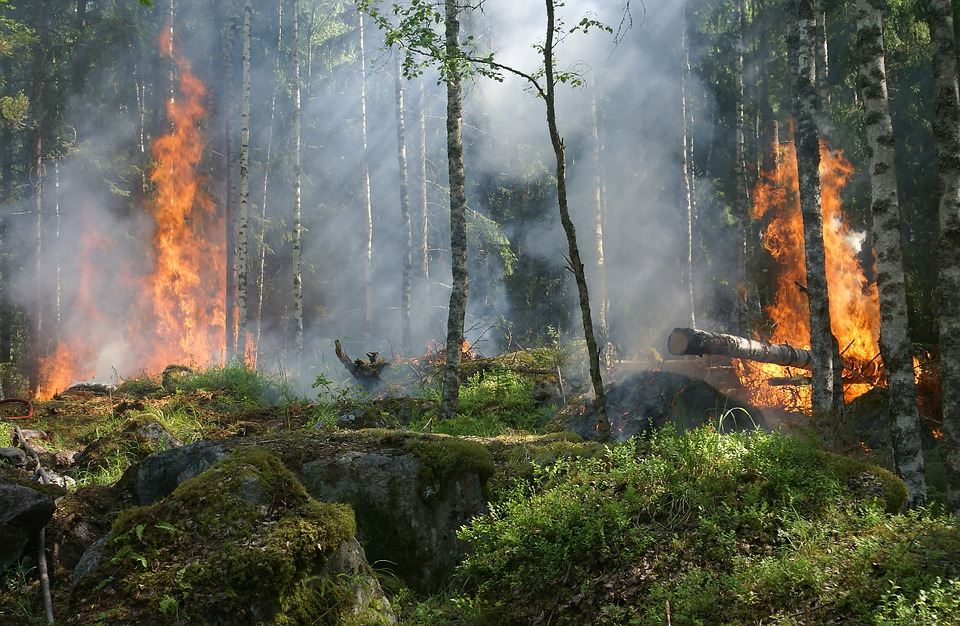 Красноярцев просят сообщать о лесных пожарах на телефон горячей линии