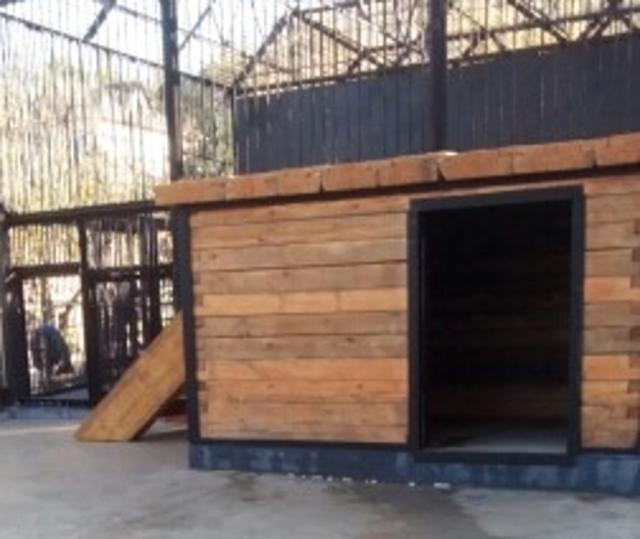 Для спасенной медведицы в красноярском зоопарке возвели новый бассейн