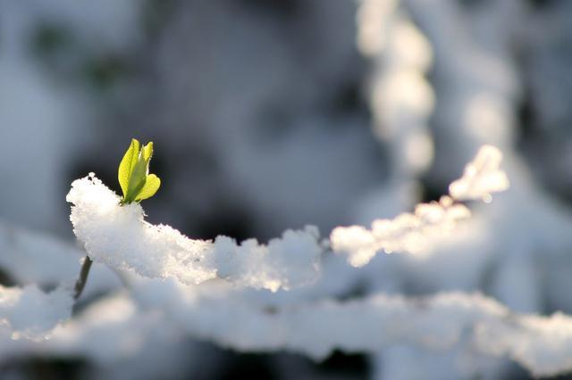 Синоптики обещают потепление в Красноярске только на выходных