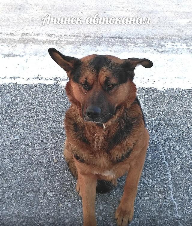 Красноярцы поддержали идею строительства приюта для бродячих собак