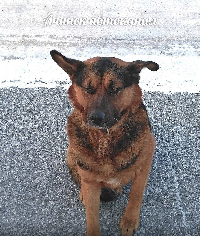 Скандального отловщика собак внесли в чёрный список подрядчиков Красноярска
