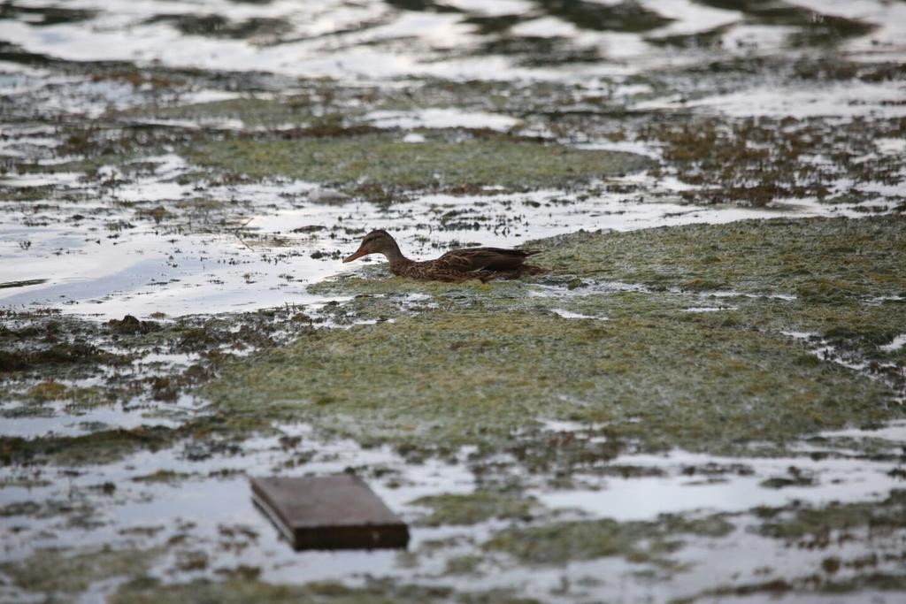 Каких птиц можно увидеть в Красноярске