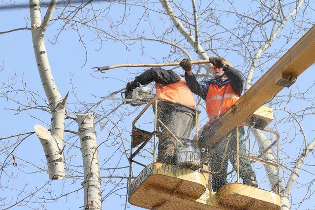 В Красноярске начинается плановая обрезка деревьев