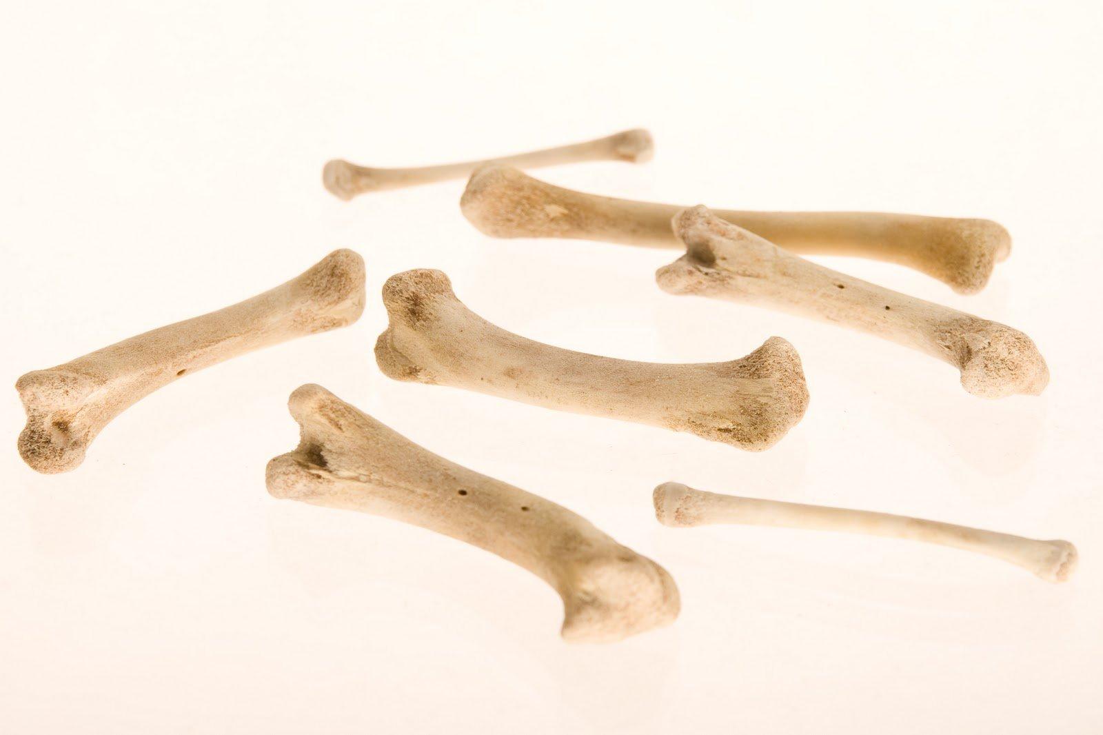Следователи проводят проверку по факту обнаружения в Канске человеческих костей
