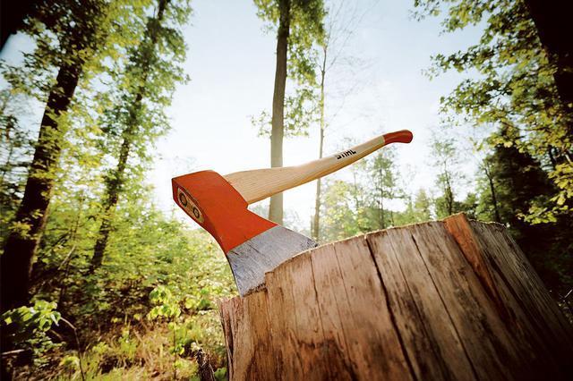 В Канске «чёрный» лесоруб срубил деревьев на миллион рублей