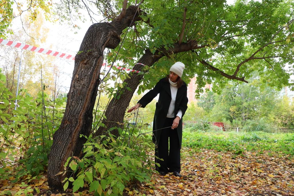 В красноярских школах и детских садах обследуют деревья