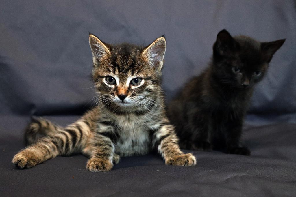 Красноярец ищет дом для двух очаровательных котят