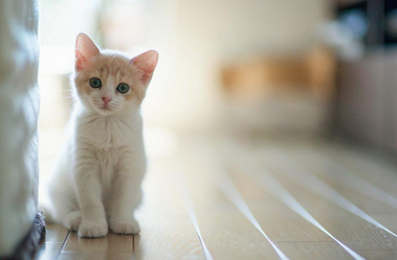 Красноярцы согласны поменять кошку на iPhone