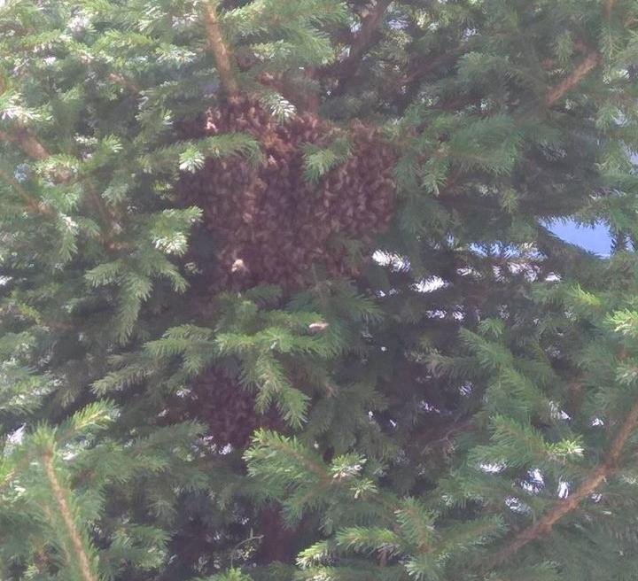 Красноярцев просят спасти пчёл