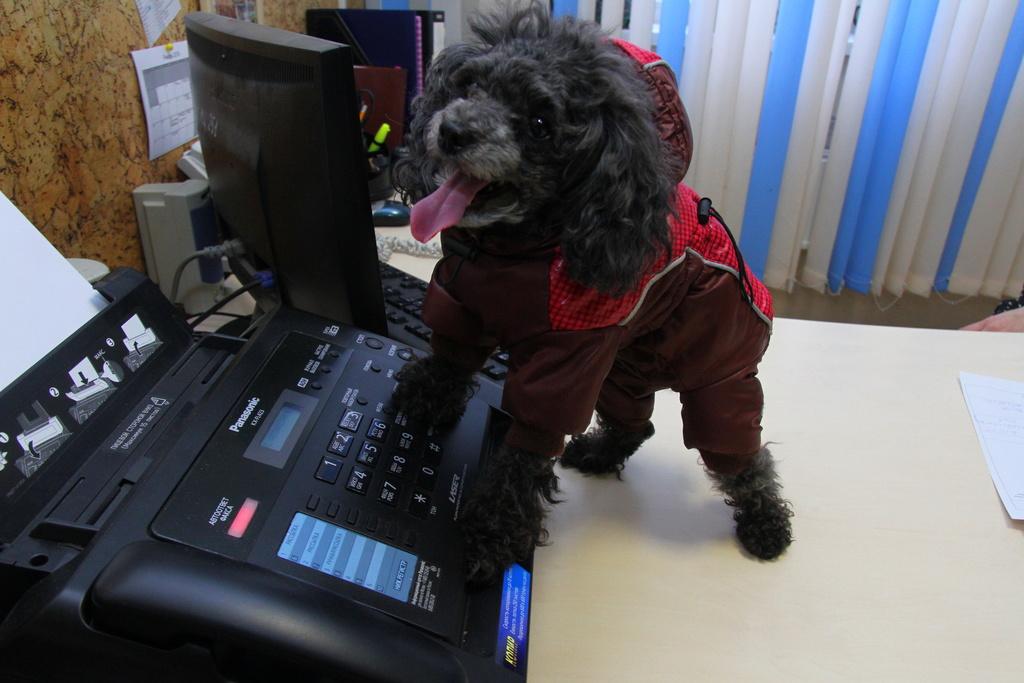Каких животных держат в красноярских офисах