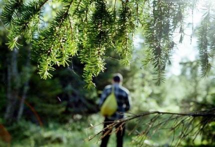В Красноярском крае пропали четыре грибника