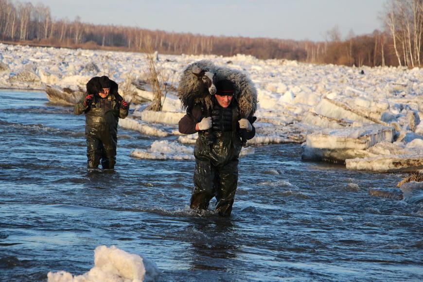 В Красноярском крае спасатели вынесли животных из зоны подтопления