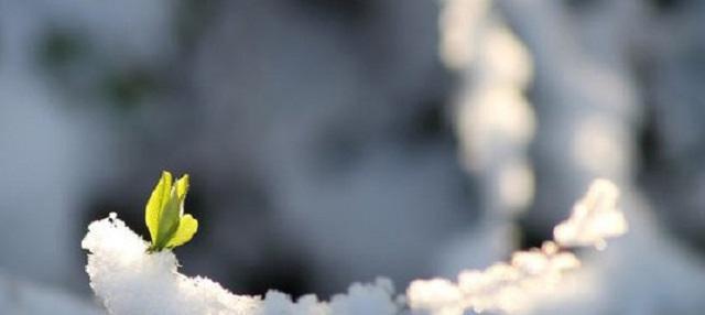 Потепление до -3 прогнозируют Красноярску на следующей неделе
