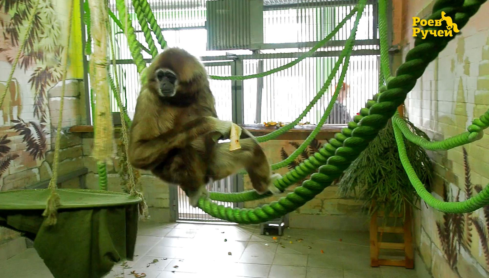 Обезьян красноярского зоопарка угостили блинами