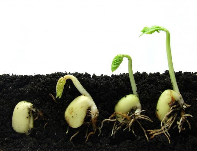 Красноярским аграриям компенсируют траты на приобретение элитных семян