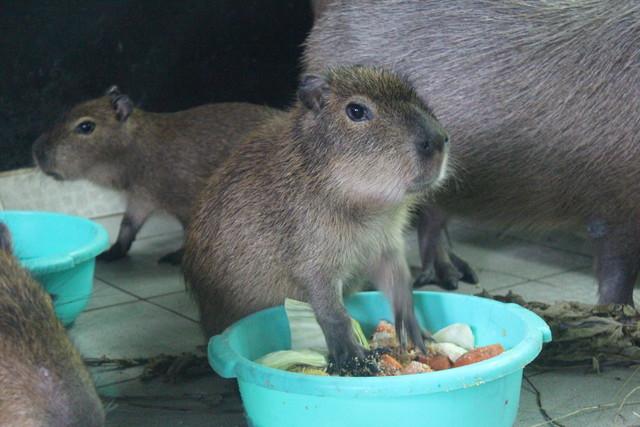 В Красноярском зоопарке начался бэби-бум