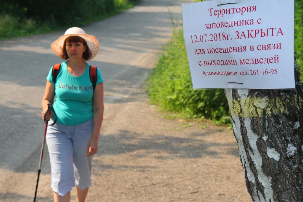 Медведи на «Столбах»: заповедник полностью закрыли от туристов