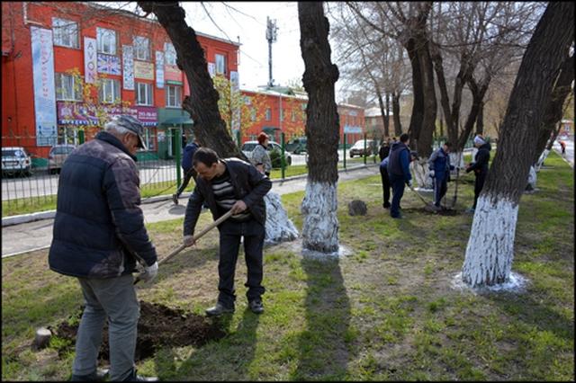 В Ленинском районе Красноярска предприниматель посадил 22 дерева