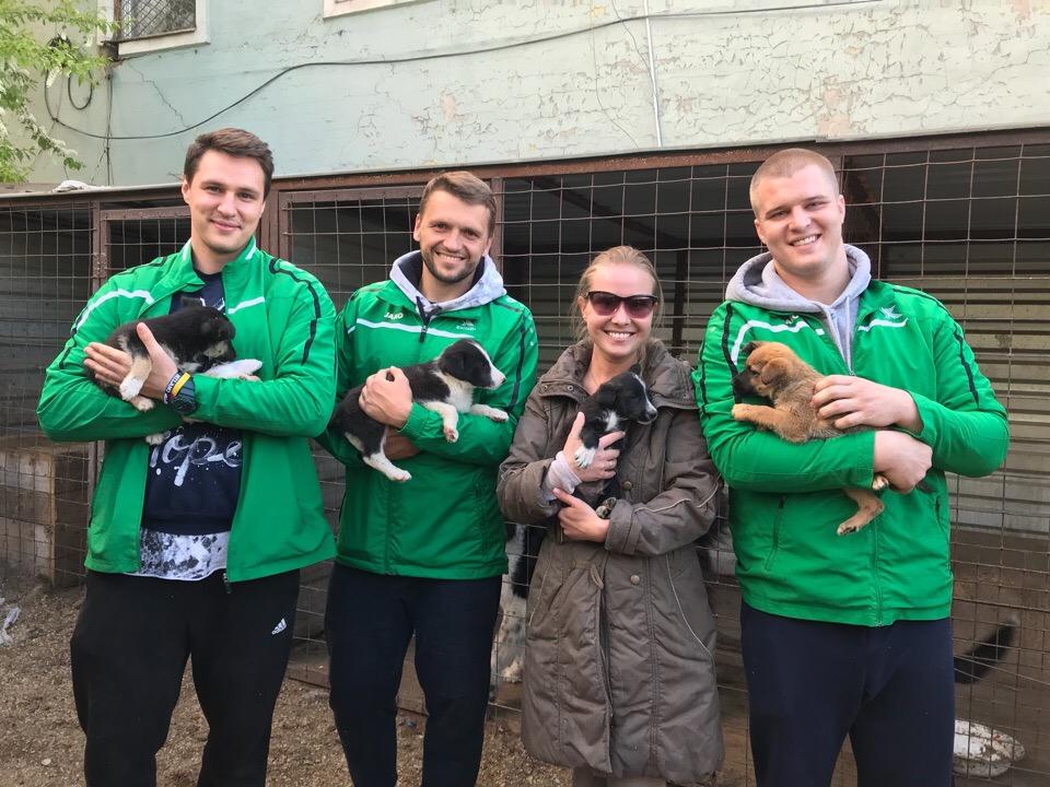 Красноярские регбисты будут помогать животным