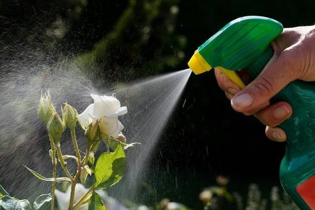 Отравление пестицидами. Симптомы, профилактика, первая помощь при отравлении