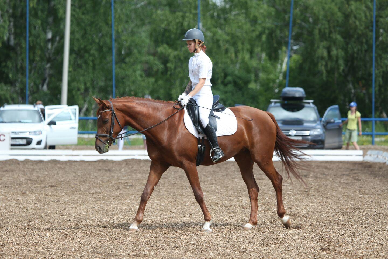 В Красноярске завершился чемпионат СФО по конному спорту