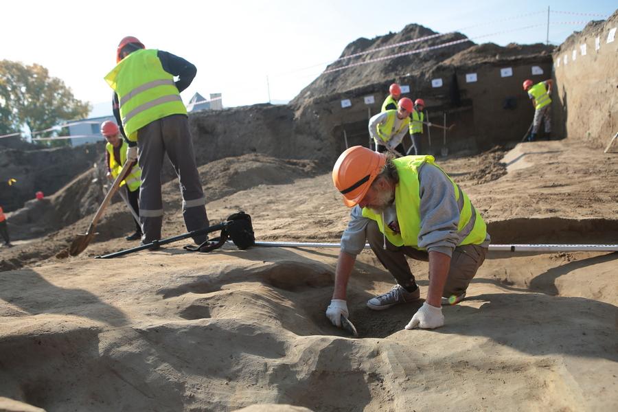 В Красноярске нашли кости первобытного бизона